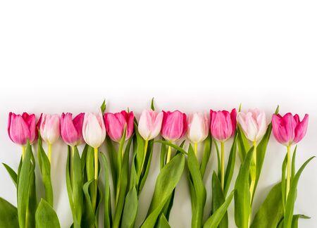 Wiosna świeże wielokolorowe tulipany na białym tle. Gratulacje. Walentynki, wiosna, Wielkanoc. Miejsce na tekst.