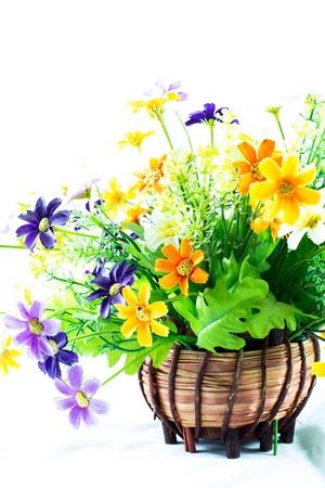lobelia: Colourful flowers in a pot