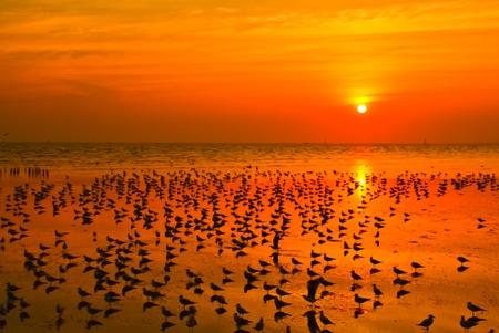Sunset sea  gulf of thailand photo