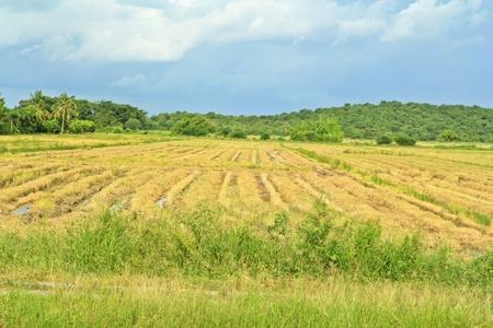 Country landscape thailand photo