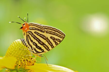 Macro butterfly in bangkok thailand photo