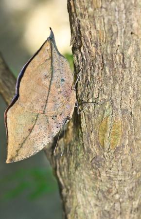 Macro butterfly in bangkok thailand photo