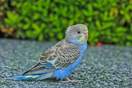 Bird animal in bangkok thailand photo