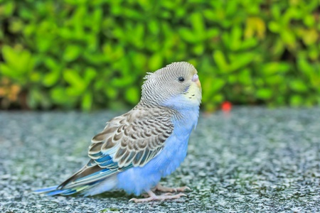 Bird animal in bangkok thailand photo