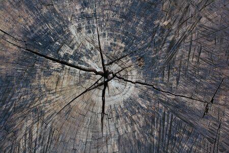 Wooden photo