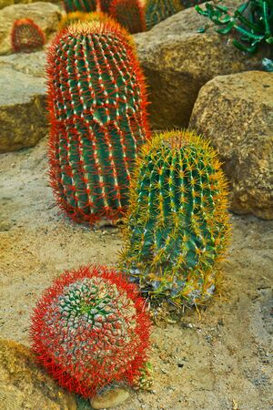 Cactuses at Nong Nooch park in Pattaya photo