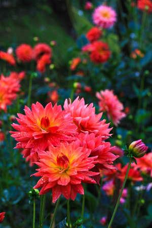 Flower at the garden photo