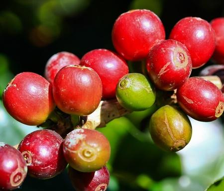 Coffee Stock Photo - 13276081