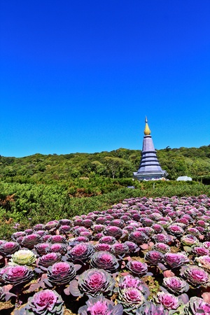 Pagoda Doi Inthanon in thailand Stock Photo - 13426673