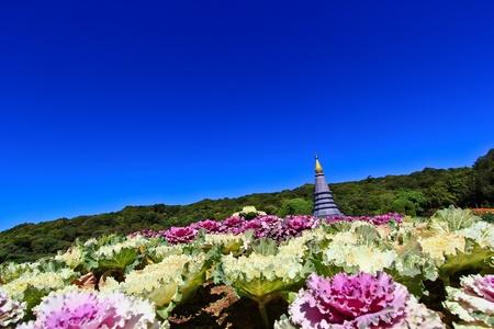Pagoda Doi Inthanon in thailand Stock Photo - 13426292