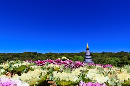 Pagoda Doi Inthanon in thailand Stock Photo - 13426250