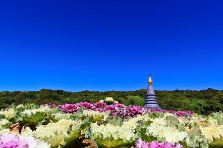 Pagoda Doi Inthanon in thailand Stock Photo - 13426250