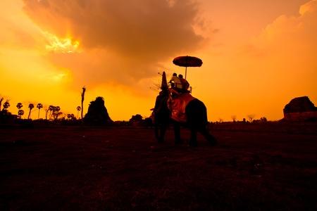 elephant sunset ayuttaya in thailand Stock Photo - 13427309