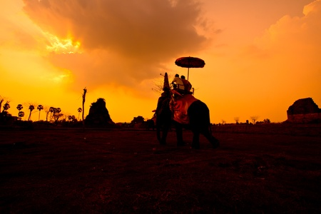 elephant sunset ayuttaya in thailand Stock Photo - 13427309