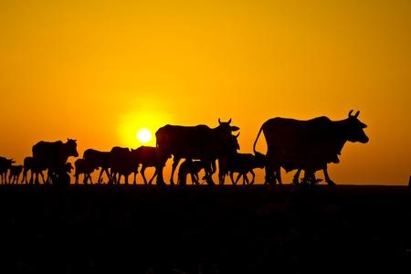 sunset countryside thailand Stock Photo - 13427077