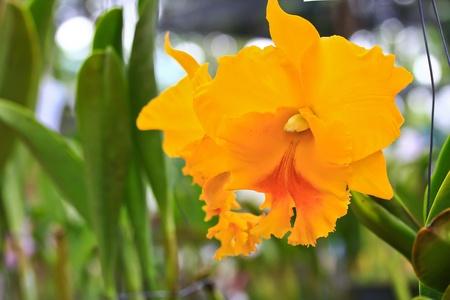 beautiful  orchid Stock Photo - 13505033
