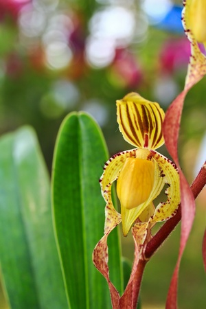 beautiful  orchid Stock Photo - 13505120