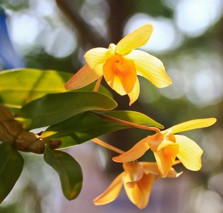 Beautiful orchids photo