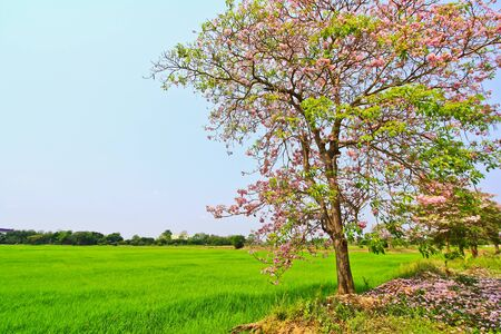 Beautiful trees  Stock Photo - 13538470