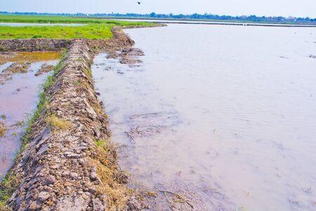 Peasant farming  photo