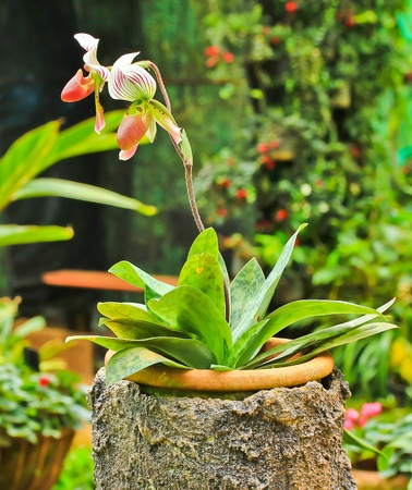 Jardín de Orquídeas Foto de archivo - 13527559
