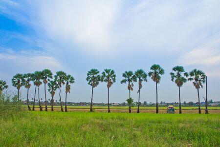view landscape in thailand photo