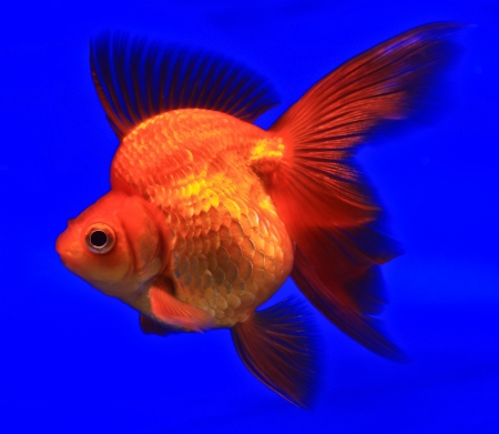 Fish in the aquarium glass Stock Photo - 13695699