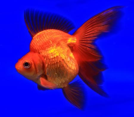 Fish in the aquarium glass Stock Photo - 13695699