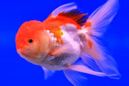 Fish in the aquarium glass Stock Photo - 13695588