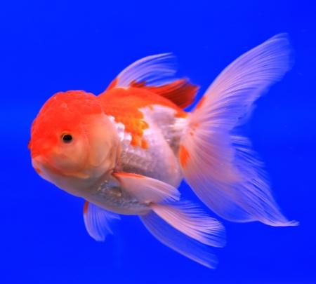 Fish in the aquarium glass Stock Photo - 13695700
