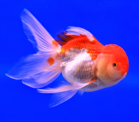 Fish in the aquarium glass Stock Photo - 13695723