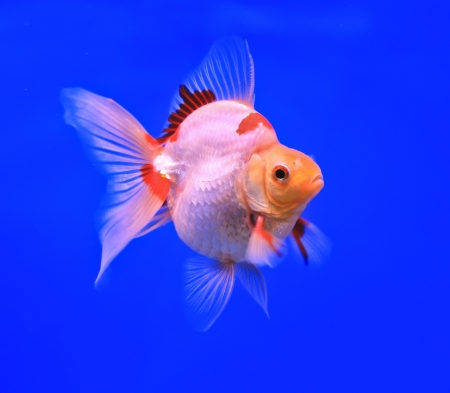 Fish in the aquarium glass Stock Photo - 13695561