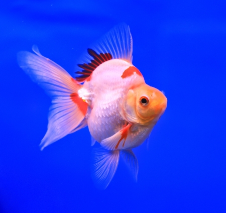 Fish in the aquarium glass Stock Photo - 13695546