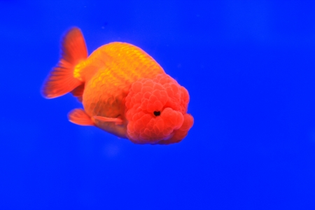 Fish in the aquarium glass Stock Photo - 13695889