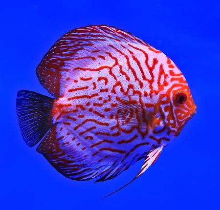 Fish in the aquarium glass Stock Photo - 13695757