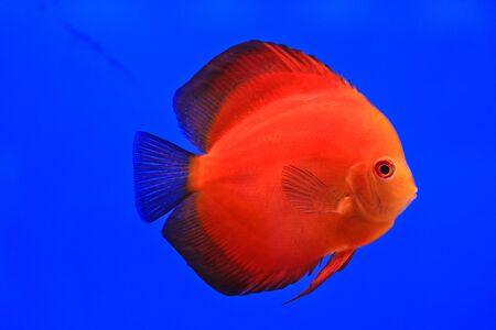 Fish in the aquarium glass Stock Photo - 13695905