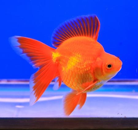 fishtank: Fish in the aquarium glass Stock Photo