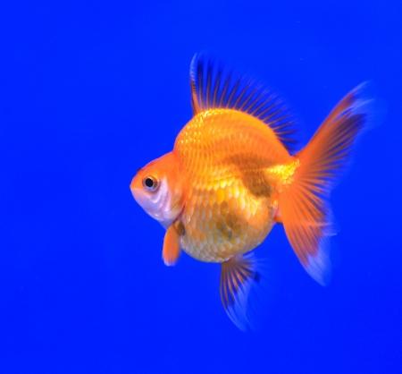 Fish in the aquarium glass Stock Photo - 13695602