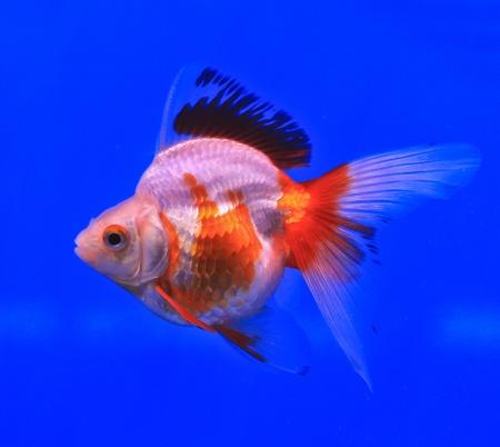 Fish in the aquarium glass Stock Photo - 13695467