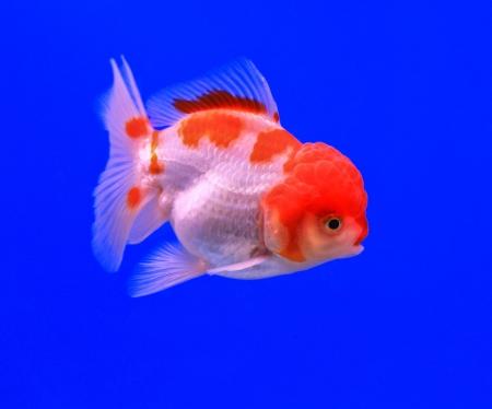 Fish in the aquarium glass Stock Photo