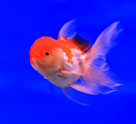 Fish in the aquarium glass Stock Photo - 13695732