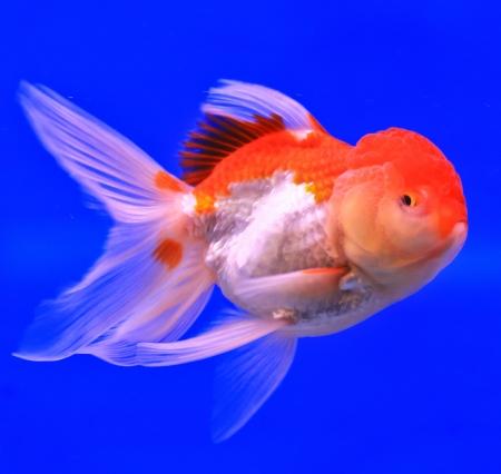 Fish in the aquarium glass Stock Photo - 13695590