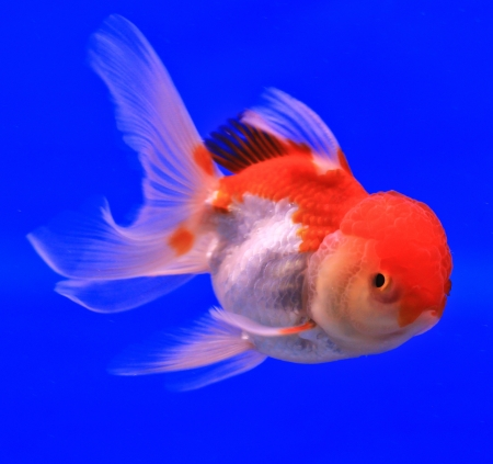 Fish in the aquarium glass Stock Photo - 13695556