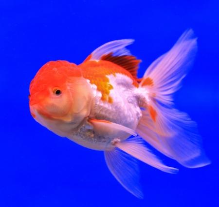 Fish in the aquarium glass Stock Photo - 13695549