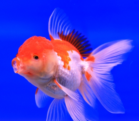 Fish in the aquarium glass Stock Photo - 13695459