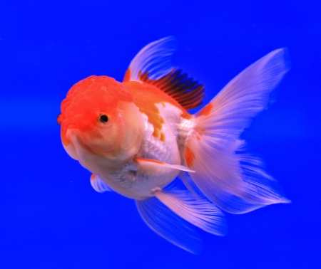 Fish in the aquarium glass Stock Photo - 13695542