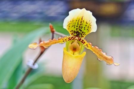 Orchid Garden photo