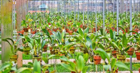 Orchid Garden Stock Photo - 13948102