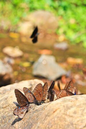 sanguisorba: butterfly