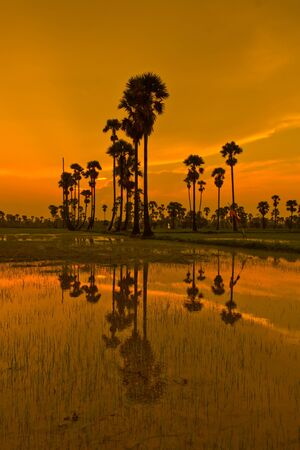 Sunset Paddy in thailand  photo